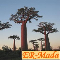 ER-Mada
